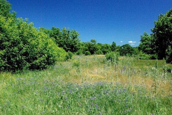 Deer Ridge Drive